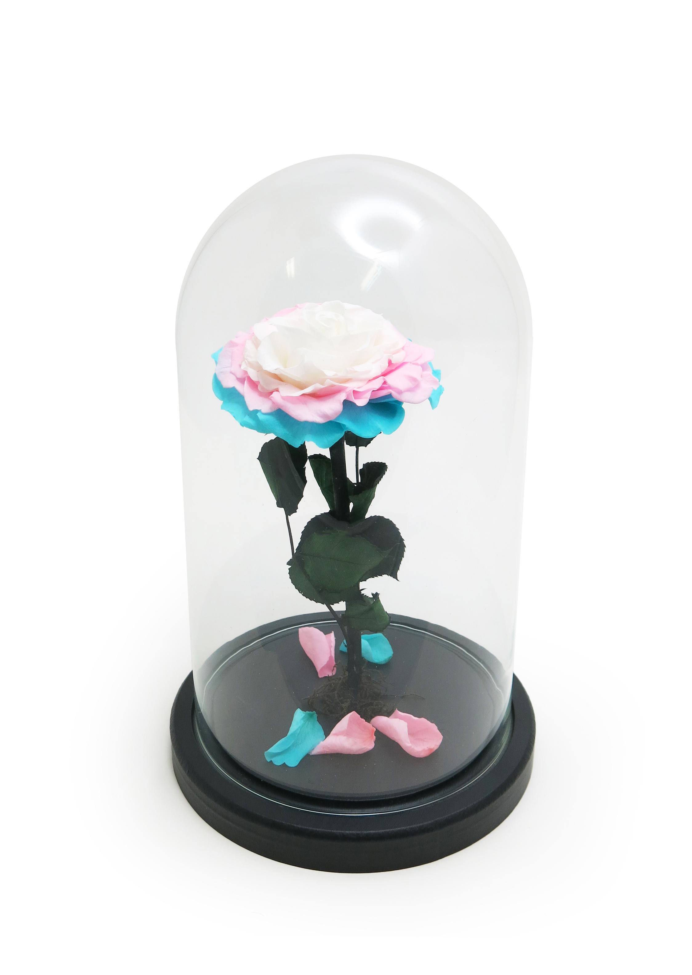 """Стабилизированная Роза в стеклянной колбе H26 D16 цвет бутона """"переход Голубой, розовый, белый"""""""