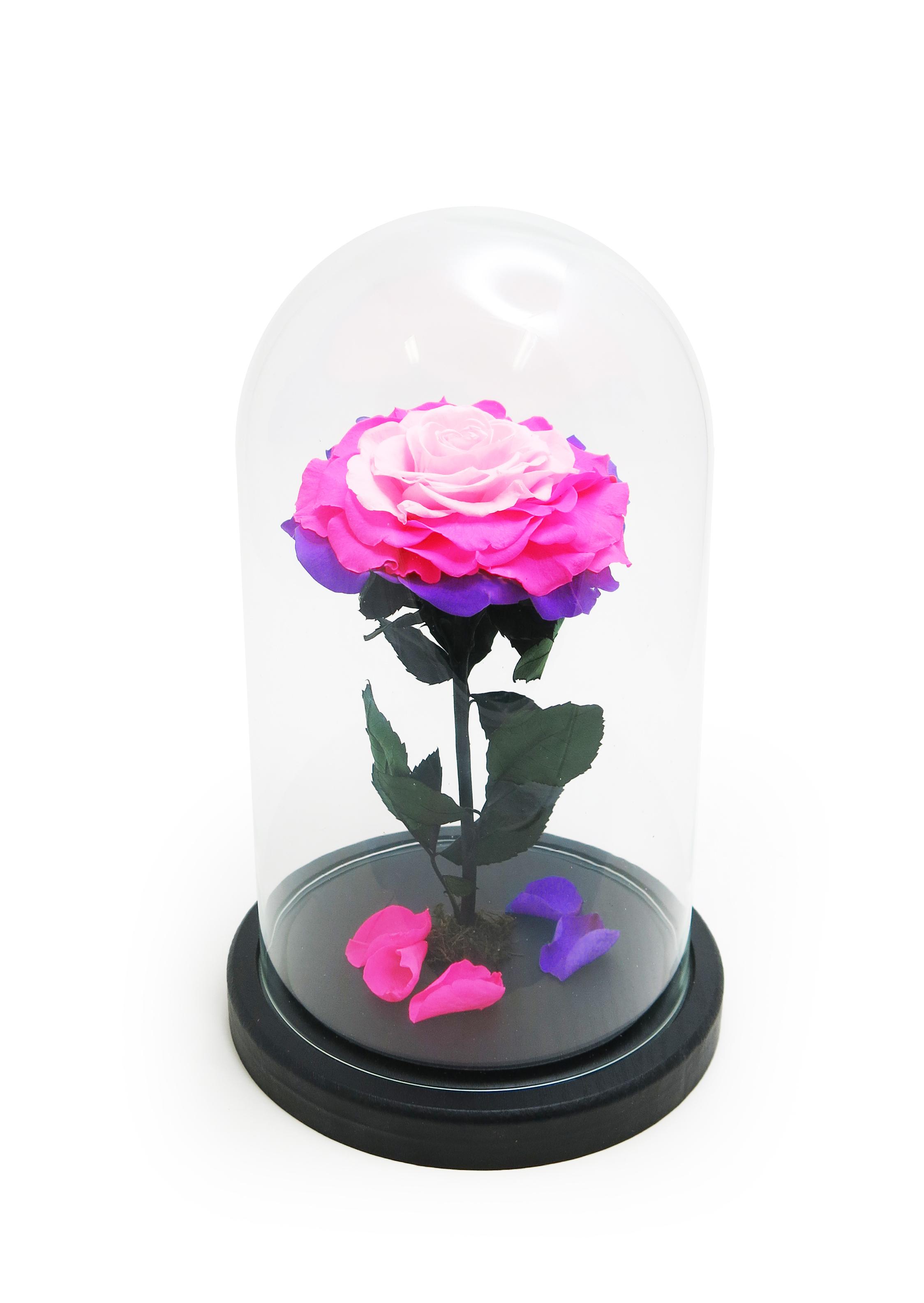 """Стабилизированная Роза в стеклянной колбе H26 D16 цвет бутона """"переход Лиловый, ярко-розовый, розовый"""""""