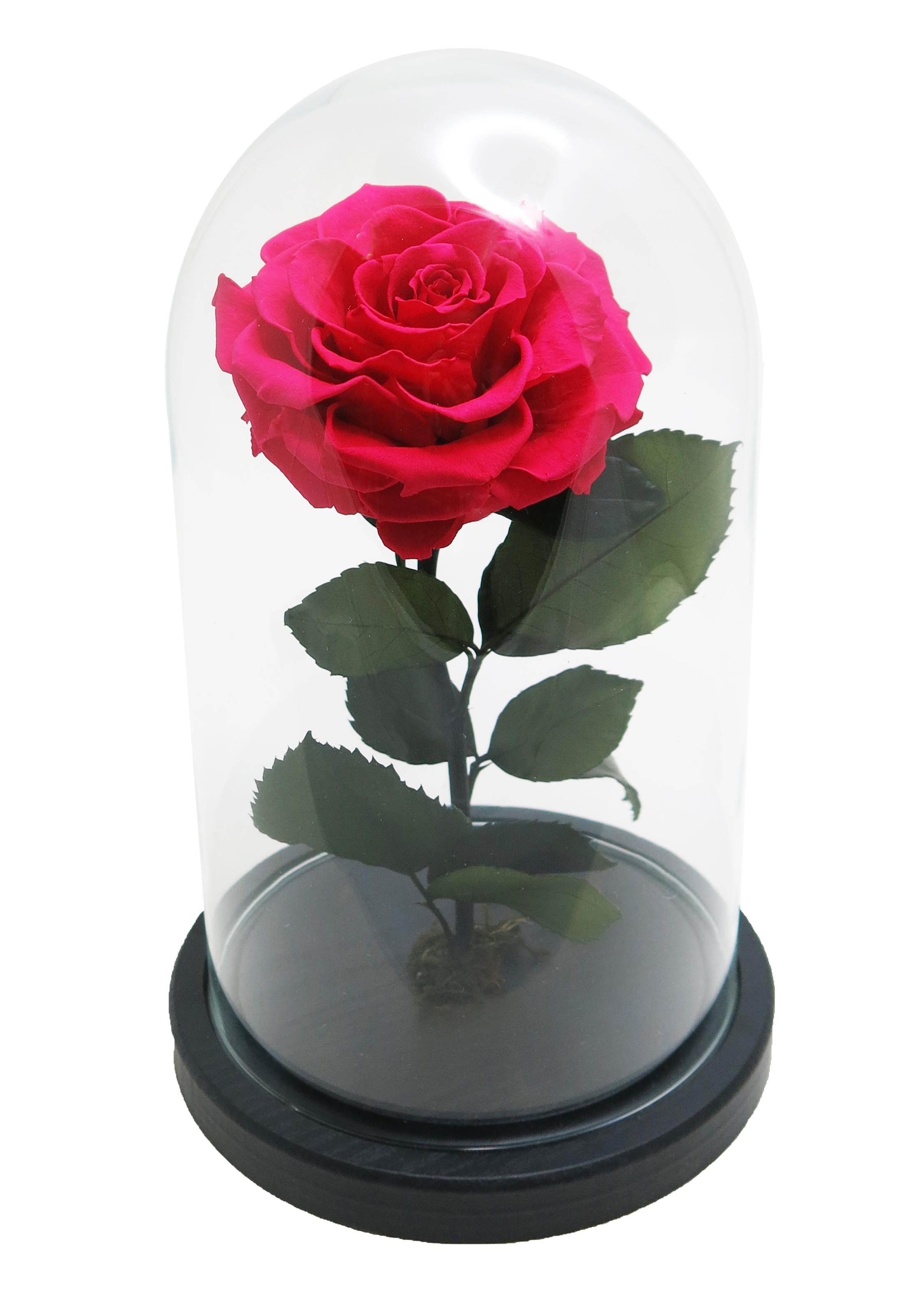 """Роза стеклянной колбе 26 см высота 15 см диаметр в стиле """"Красавица и чудовище"""" цвет бордовый"""