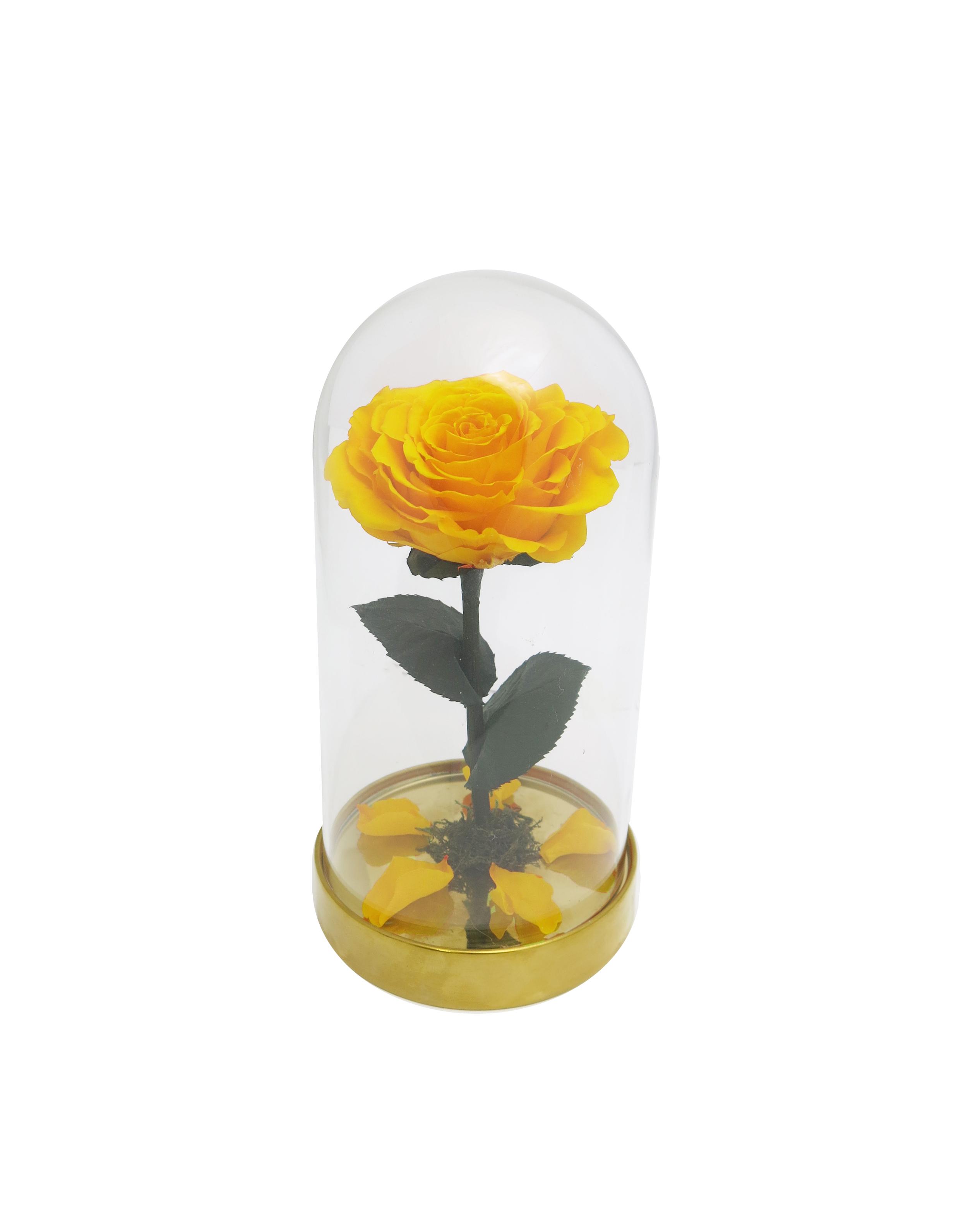 """Роза стеклянной колбе в стиле """"Красавица и чудовище"""" в стеклянном куполе H20 D10 цвет жёлтый"""