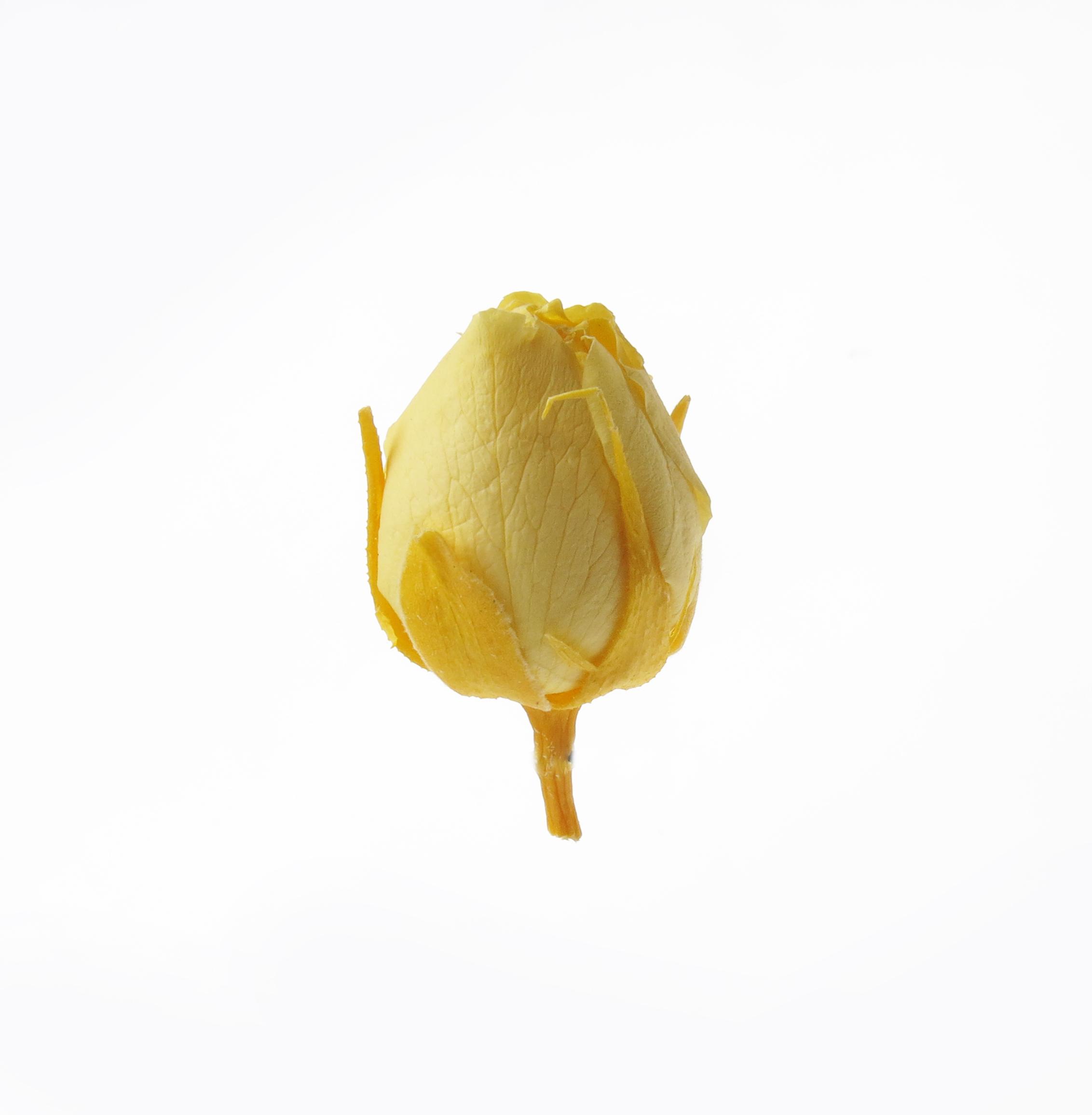 Роза микро,  цвет желтый, H-2 см D-2 см 20шт/упак